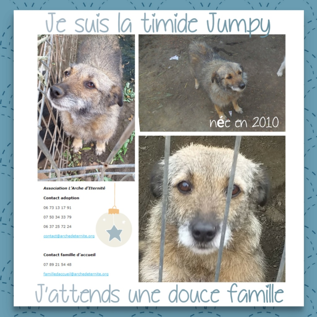 JUMPY femelle née en 2010- sauvé de l'équarrissage le 10/04/2014- parrainée par Edni94 -R-SC-SOS - Page 3 Jumpy10