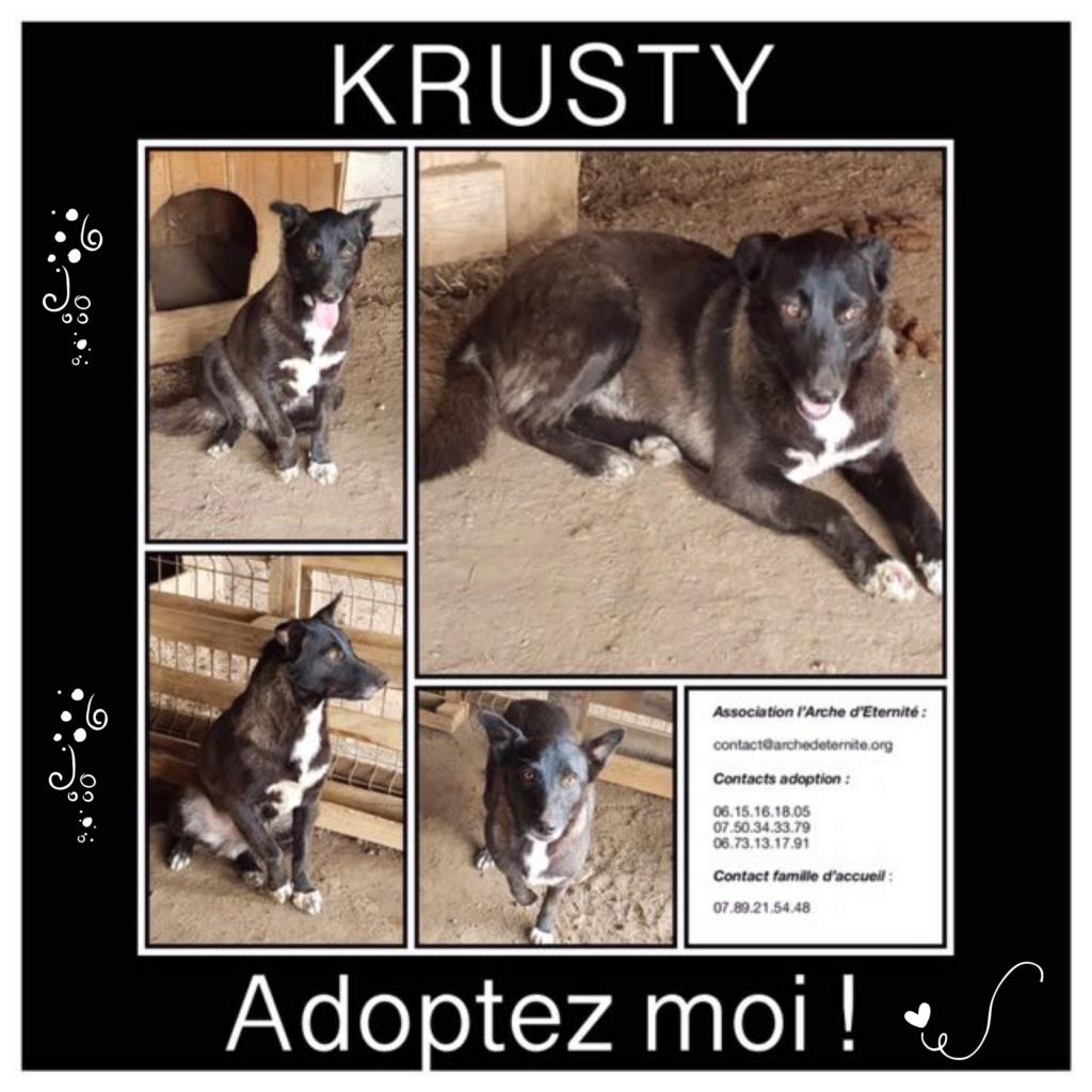 krusty - Krusty - né le 16/03/2013 - en FA dans le 72 - marrainé par Alexkoko - SC-R-SOS-30MA Krusty12