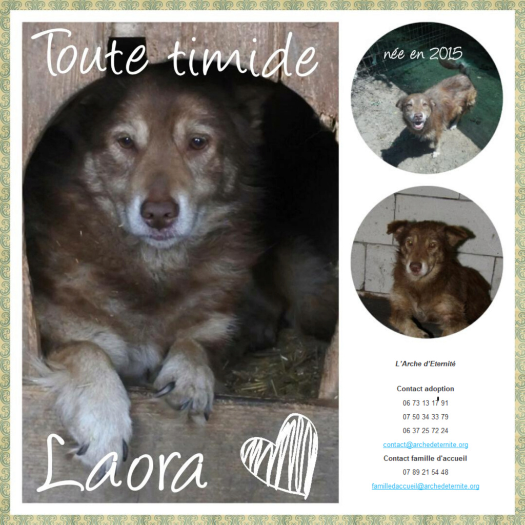 LAORA, femelle rescapée d'Oltenita du 30 avril 2015, née fin 2013, marron roux - marrainée par lilirez2 - SOS-R-SC - Page 3 Laora10