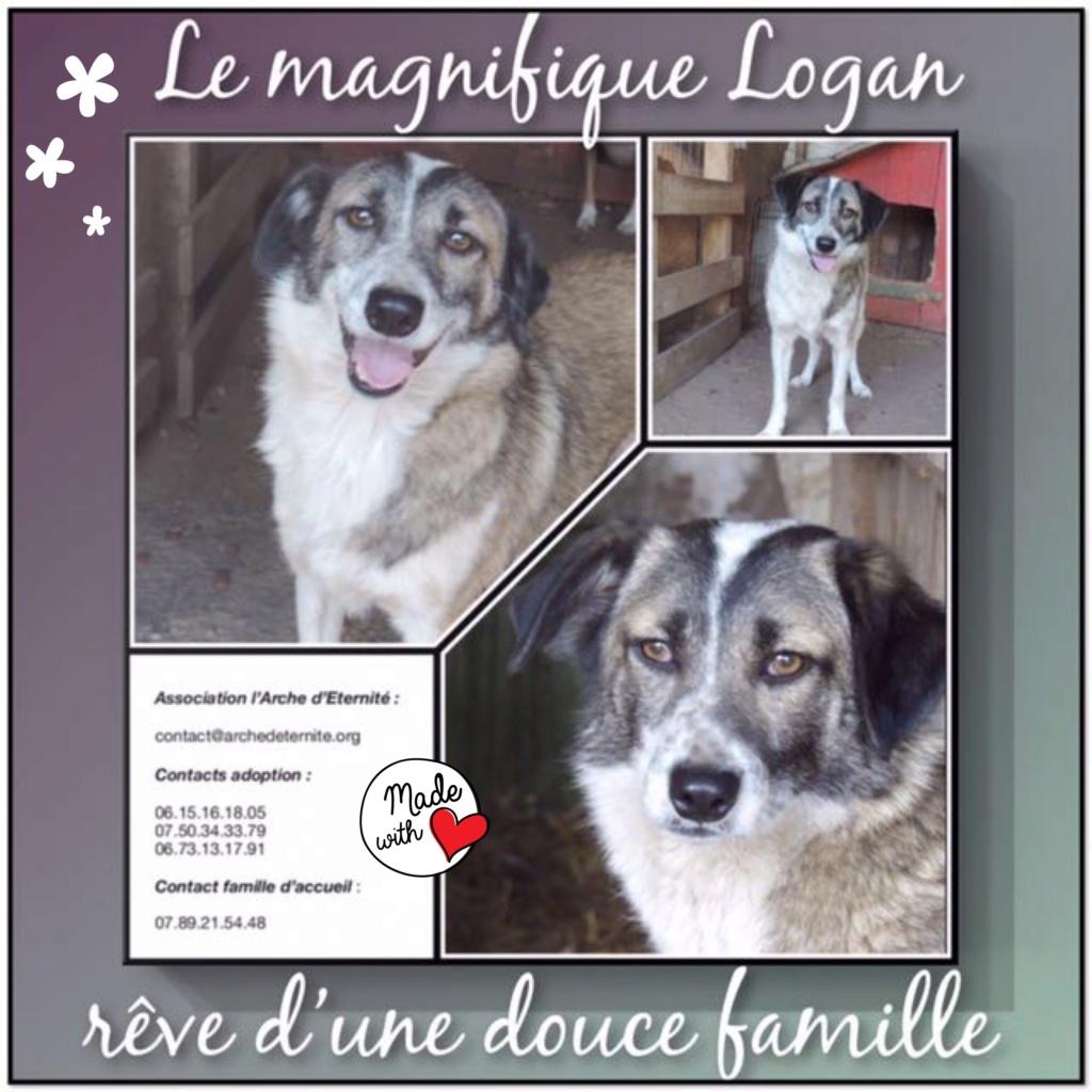 LOGAN (gabarit petit/moyen) - né en 2014 EN FA DANS LE 60, rescapé d'Oltenita, parrainé par Fanfounette et Mirko78 - R-SOS-SC-30MA - Page 4 Logan11