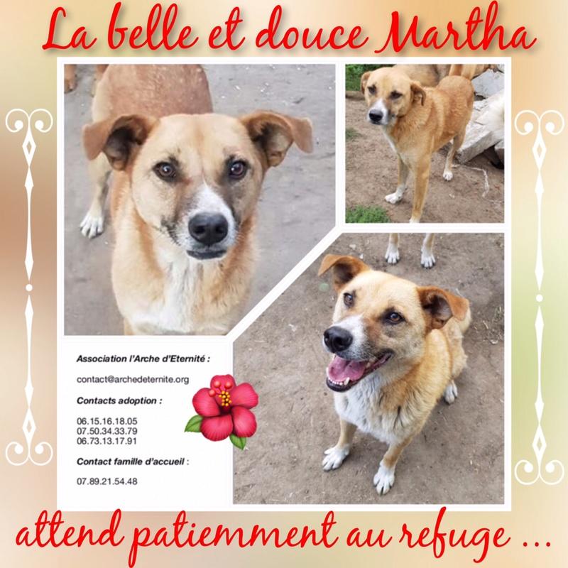 martha - MARTHA - croisée berger née en 2013 - au refuge depuis 2014, sauvée de l'équarrissage - parrainée par caroline78 - SOS-R-SC- - Page 5 Martha15