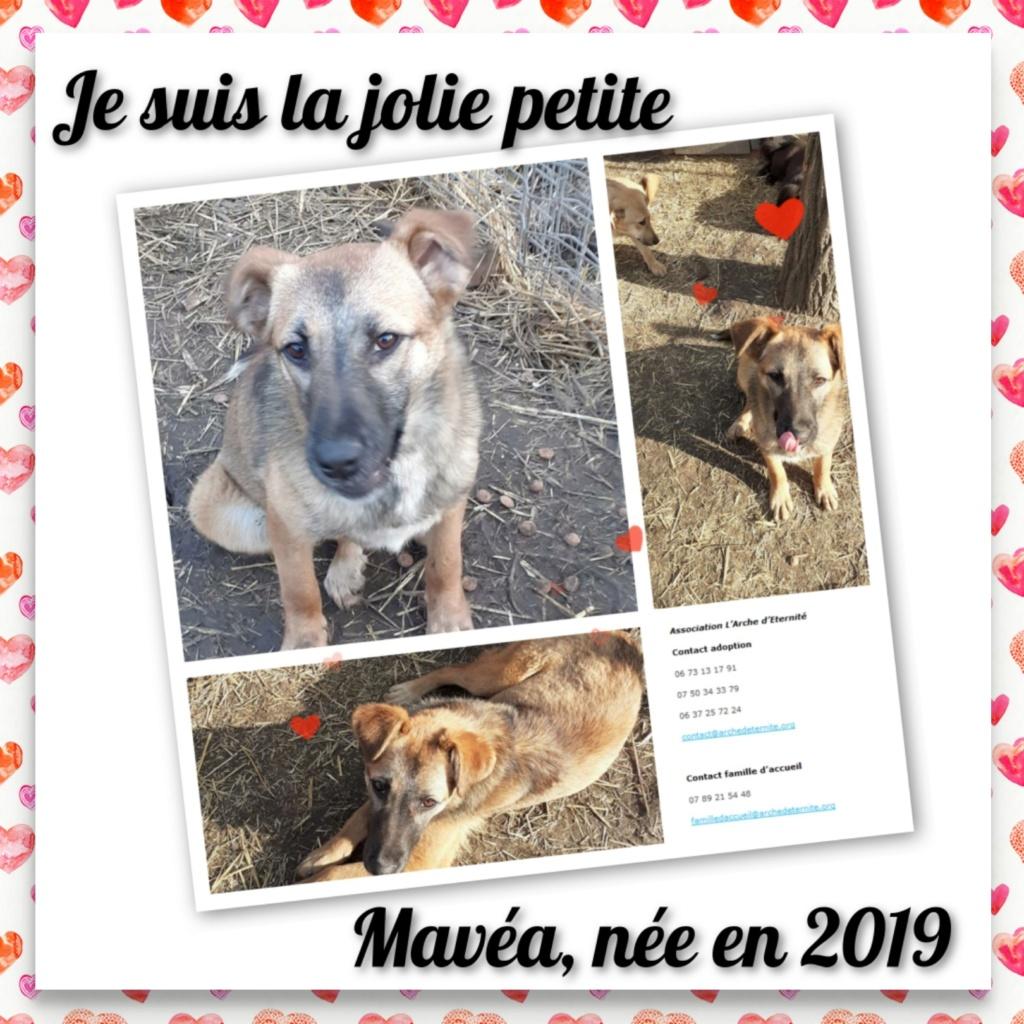 MAVÉA -FEMELLE NEE EN 2019 - SAUVETAGE DES 14 DE L'EQUARRISSAGE -R-SC-SOS Mavea210