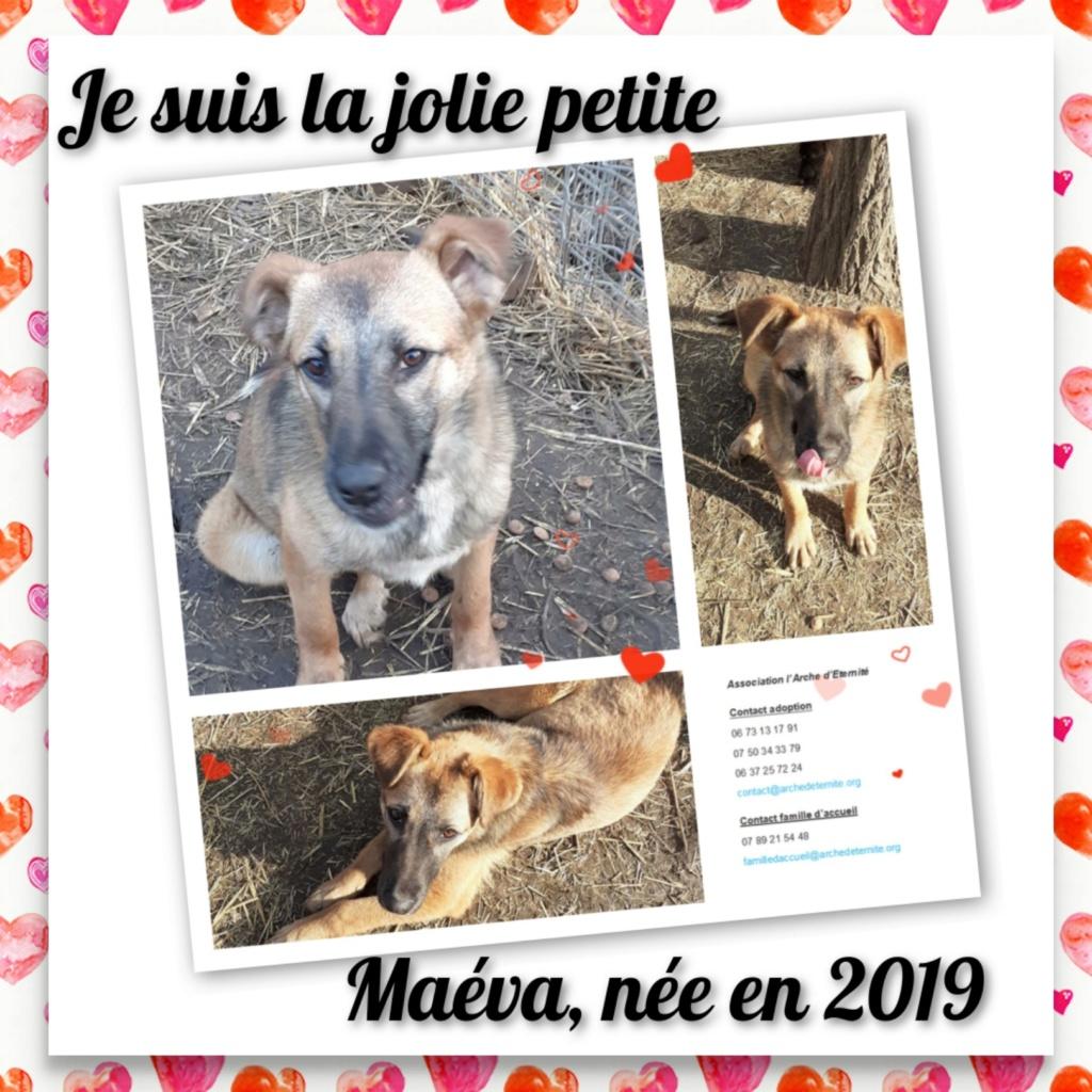 MAVÉA -FEMELLE NEE EN 2019 - SAUVETAGE DES 14 DE L'EQUARRISSAGE -R-SC-SOS Mavea_10