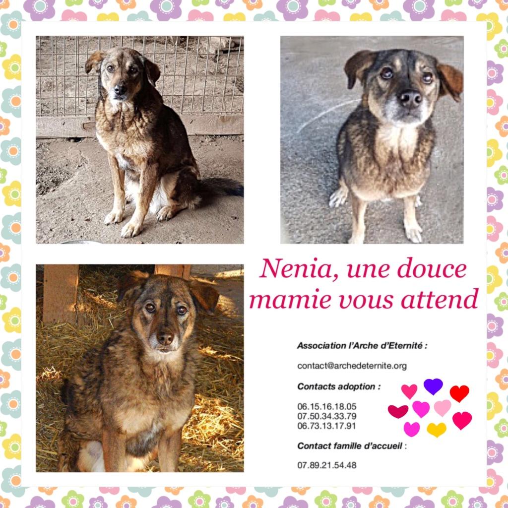 NENIA - Femelle - née en 2009   - Parrainée par Yemtsi et Nanou R-SOS-SC Nenia11
