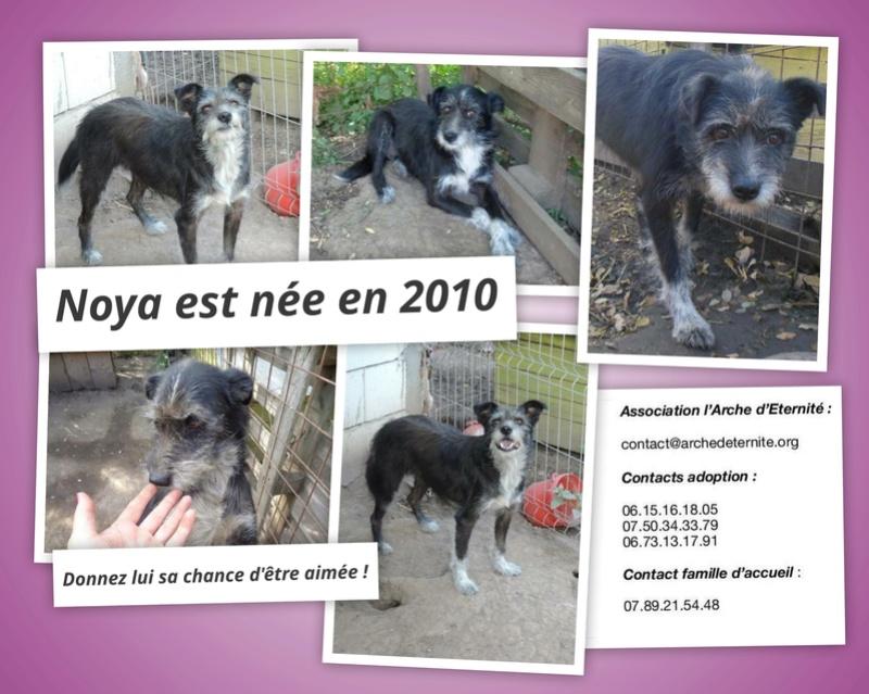 NOYA, née en 2010, En FA dans le 94 - type griffon - Parrainée par Yemtsi-R-SOS-FB-LBC-SC-AS-30MA - Page 4 Noya10