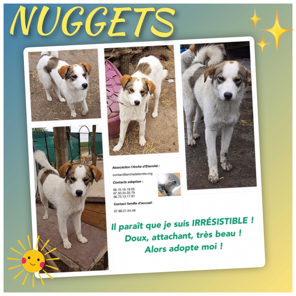 NUGGETS -  né 15/04/2018 (chiot de Wally) - marrainé par Patricia  en FA chez Nancy en Belgique -R-SOS Nugget13