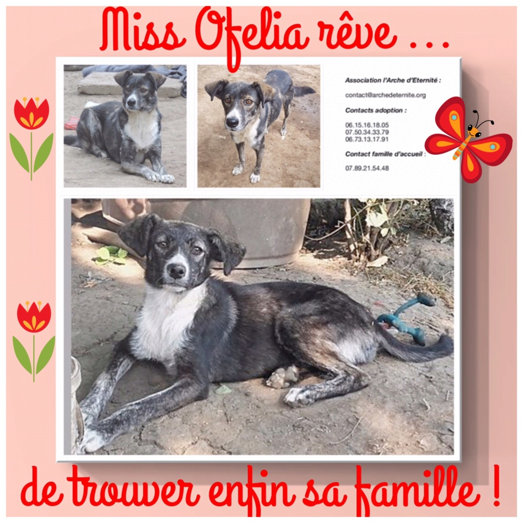 OFELIA -femelle sauvée de pallady - née en Février 2016 - marrainée par Connecticut -SOS-SC-R- - Page 3 Ofelia16