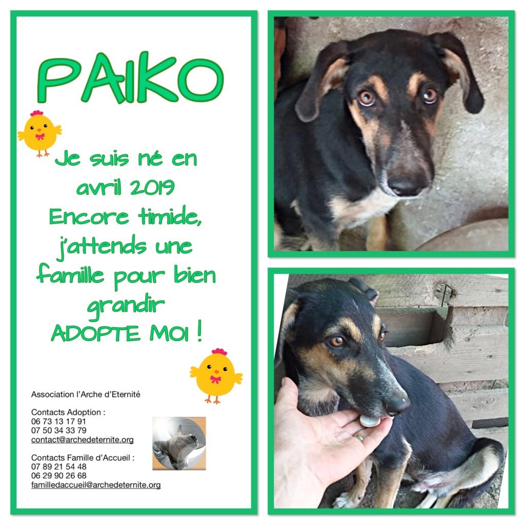 PAÏKO - mâle , né en 03/2019 amené par Oana - Parrainé par Carrat-R-SOS-SC Paiko10