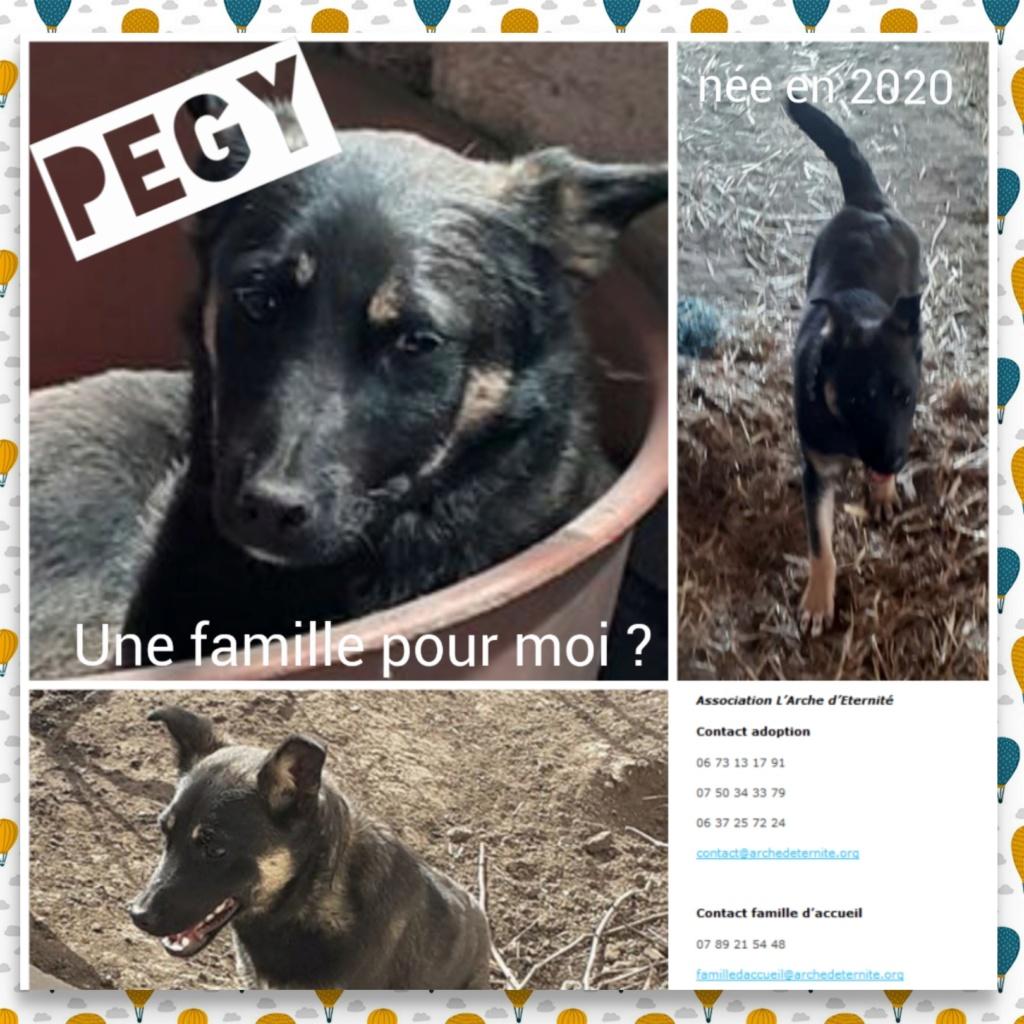 pegy - IZUKI  EX.PEGY - NÉE EN OCT 2019 - trouvée dans la rue par Lénuta avec une patte cassée - marrainée  par Fanfounette - SOS-SC-R- Pegy11