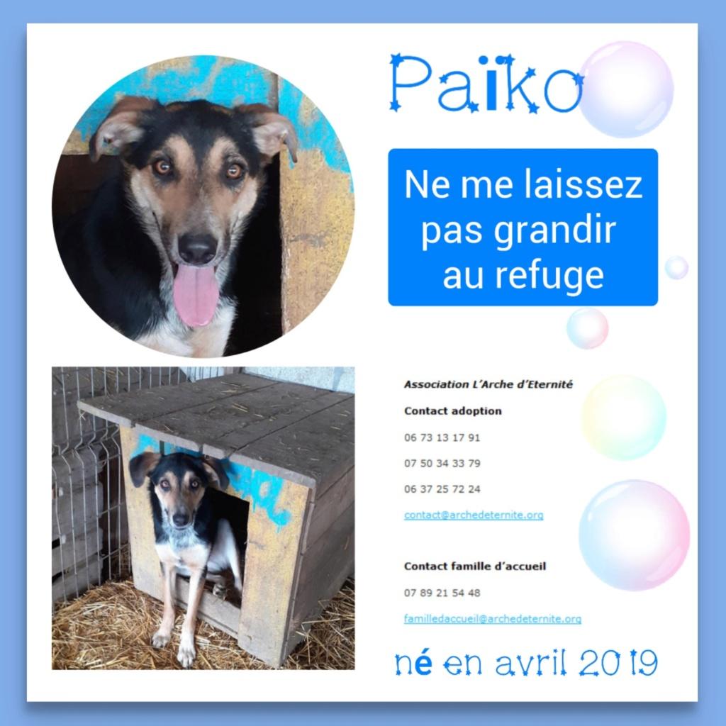 PAÏKO - mâle , né en 03/2019 amené par Oana - Parrainé par Carrat-R-SOS-SC Piako11