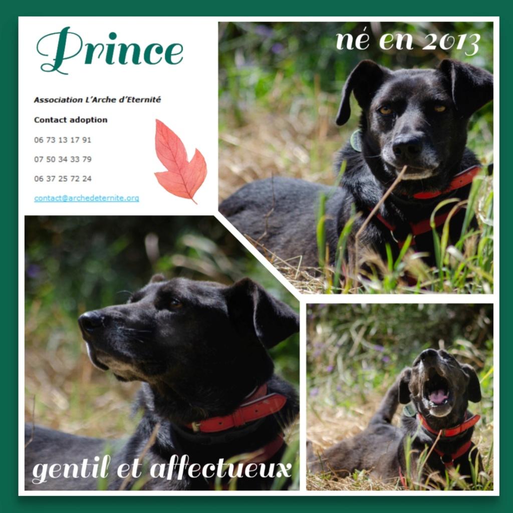 PRINCE (gabarit moyen) NE LE 29/09/2013 - EN FA DANS LE  71- marrainé par Flomyspra -SOS-R-SC- - Page 4 Prince18