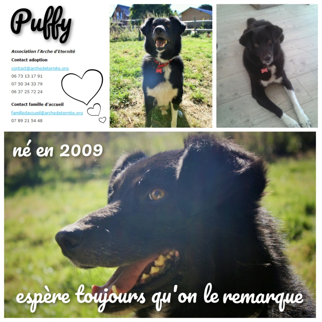 puffy - PUFFY - né le 13/05/2009 EN FA DANS LE 14  - parrainage par Nathalie Gamblin -R-SC-SOS-30MA - Page 9 Puffy112