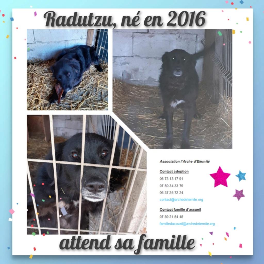 RADUTZU, mâle né en 2016- Chien de Radu sauvetage du 9/11/2019- marrainé par Pat&cie -R-SC-SOS Radutz13
