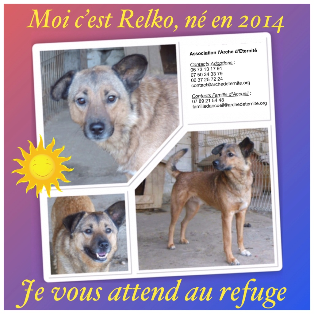 RELKO, croisé berger, né en 2014,sorti de l'équarrissage fin Avril 2017- marrainé par Maousse54 et Yemtsi -R-SC - Page 3 Relko19