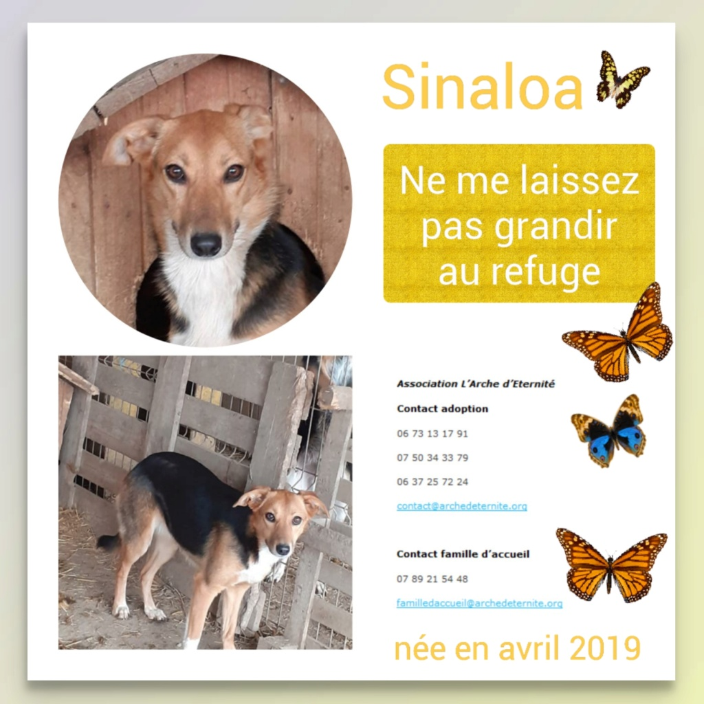 SINALOA- femelle , née en 03/2019 - amenée par Oana -R-SC Sinalo13