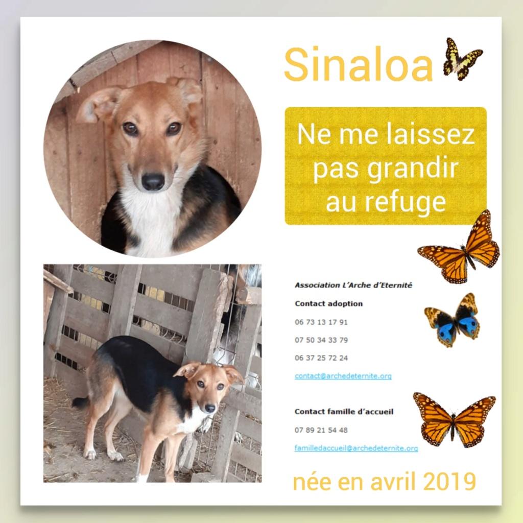 SINALOA- femelle , née en 03/2019 - amenée par Oana -R-SC Sinalo16