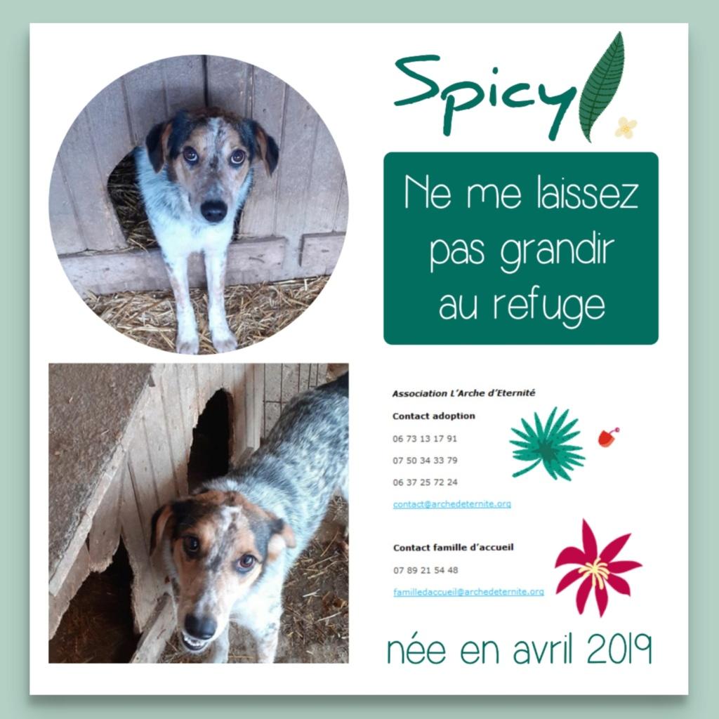 spicy - SPICY - femelle tachetée, née en 03/2019 amenée par Oana -  Marrainée par  toutoune 93 - R-SC-SOS Spicy13
