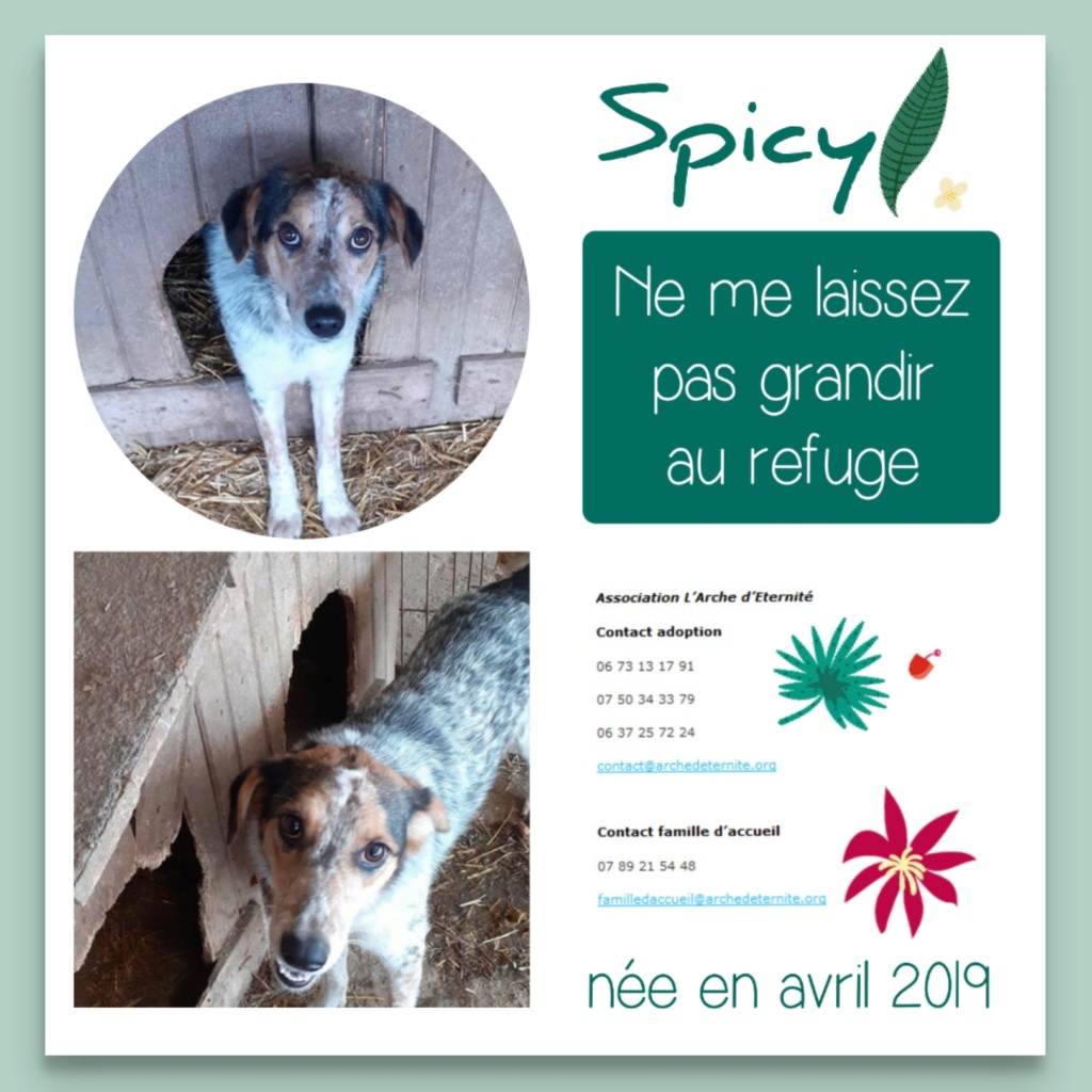 spicy - SPICY - femelle tachetée, née en 03/2019 amenée par Oana -  Marrainée par  toutoune 93 - R-SC-SOS Spicy_10