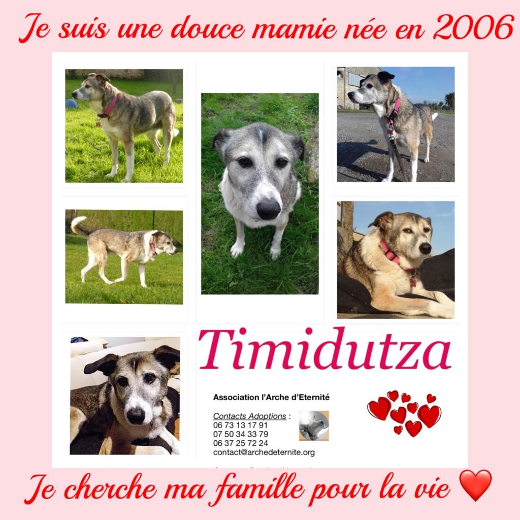TIMIDUTZA -Taille Moyenne- NEE LE 15/09/2006 EN FA DANS LE 49 - Gage-cœur Muriel S. + Nathalie R.M - 30MA-R - Page 8 Timidu13
