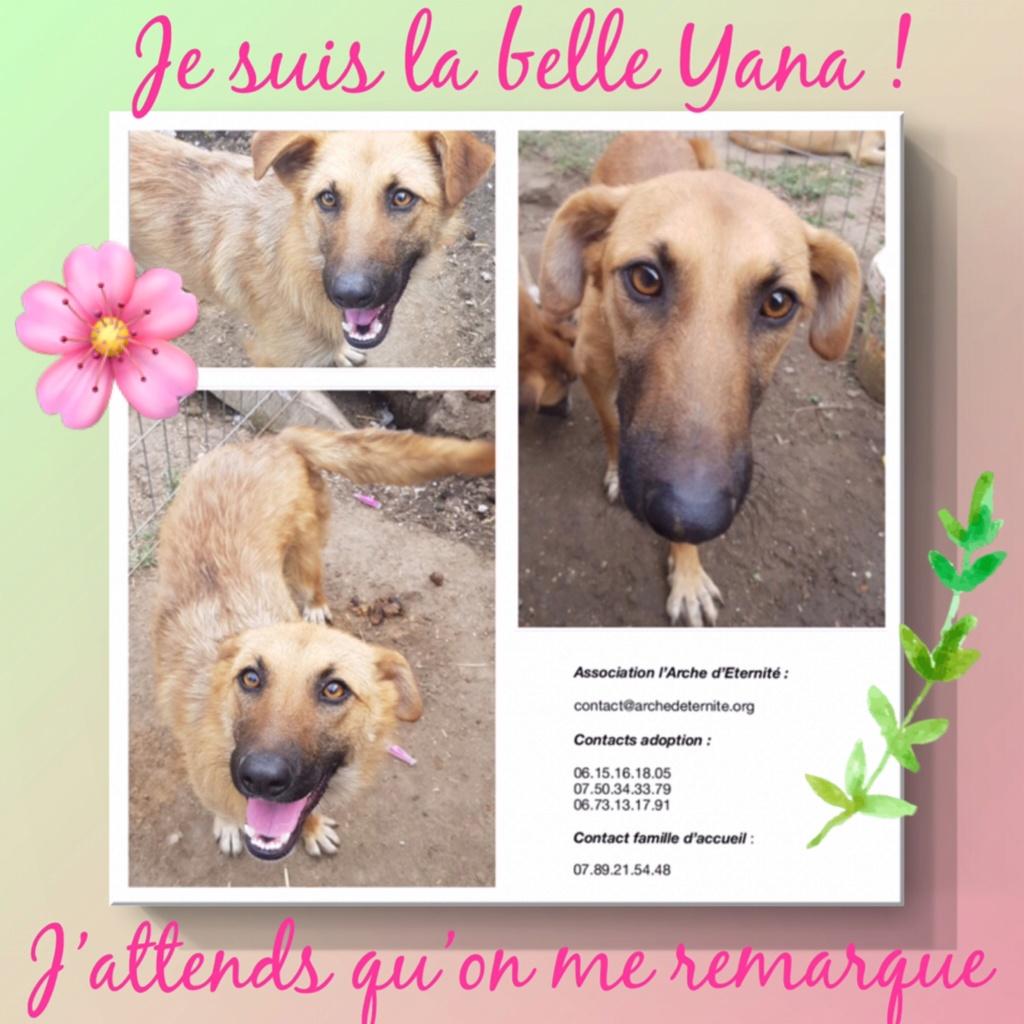 yana - YANA, couleur crème museau noir, née en sept 2016 PARRAINE PAR DASH2504 (chiot d'AKELA) - Famille trouvée par Lenuta dans un champ-R-SOS-SC Yana0115