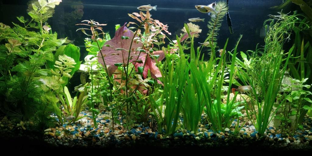 quelle plantes Plante11