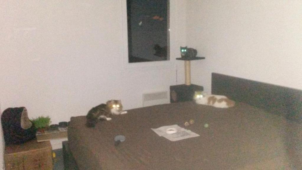 Nos chats libres Thumbn10
