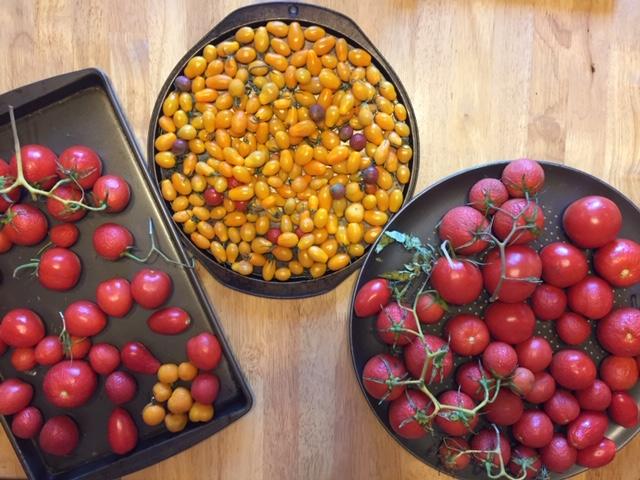 Tomato Tuesday - 2018 & 2019 - Page 8 Trays11