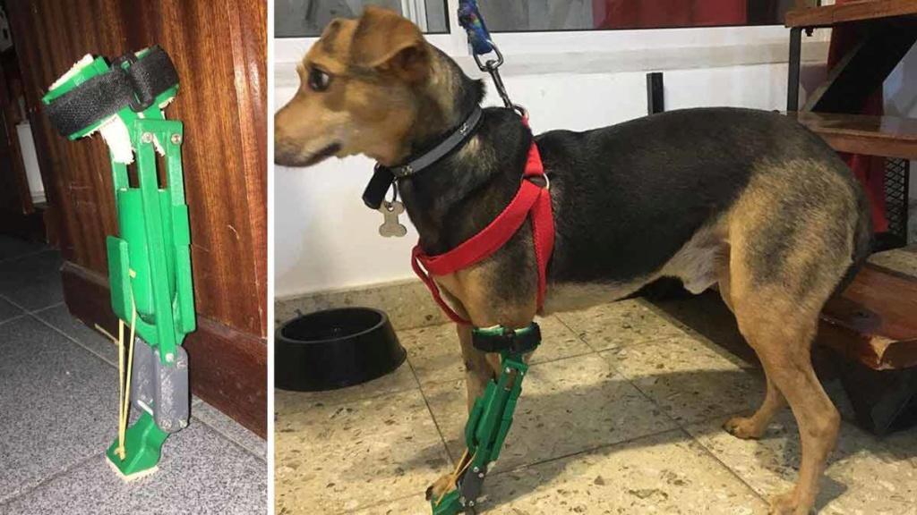 Tiene 18 años y realiza prótesis para perros con discapacidad 00174