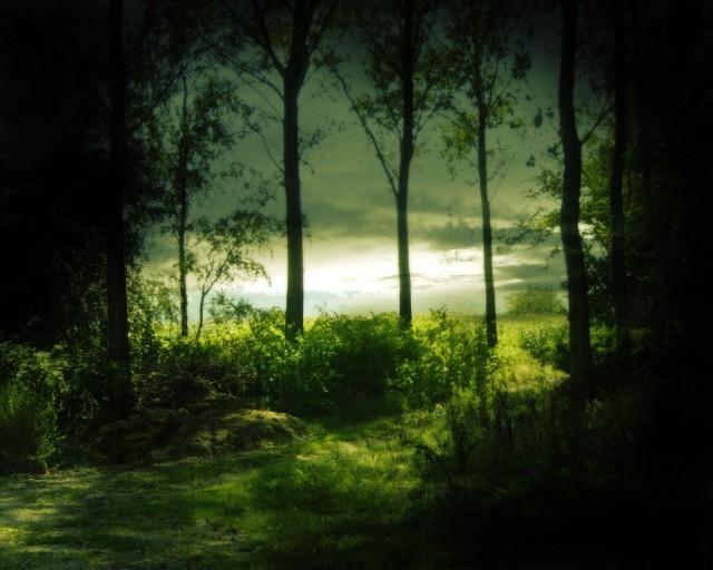 Recueil inédit Voyage au Pays des Rêves ... Le Bois des Mystères - 1ère partie Chemin10