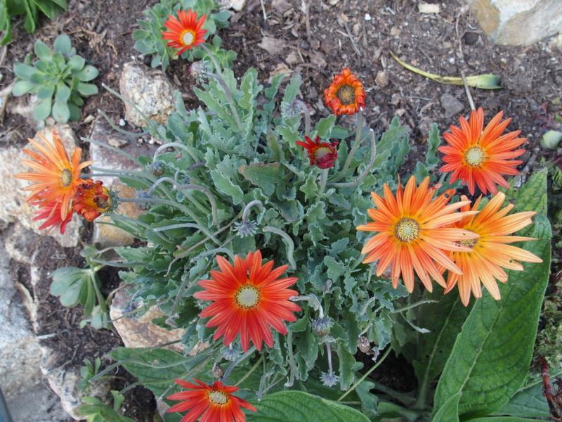 voyage en Cornouailles et les plantes qui vont avec. Pa011017