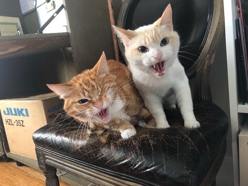Filosofía, gatitos y p0rn0: el tópic de Stoya 01888