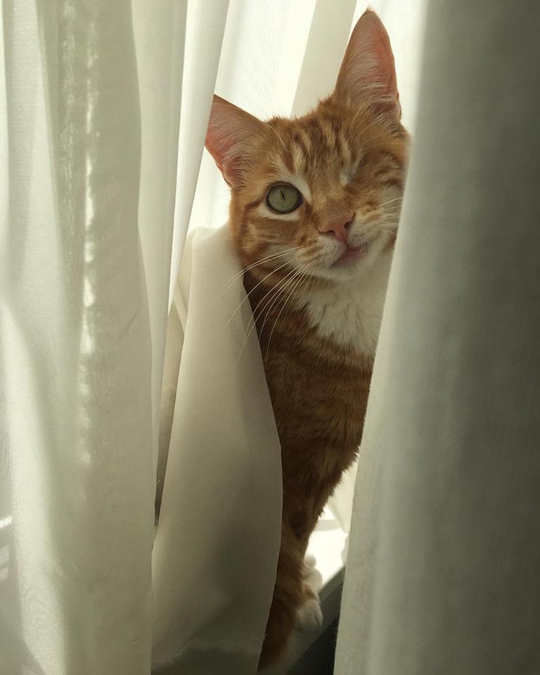 Filosofía, gatitos y p0rn0: el tópic de Stoya 01889