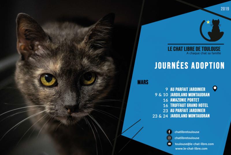 [Adoptions] Samedi 9 et dimanche 10 mars 2019 - Jardiland Montaudran Journz23
