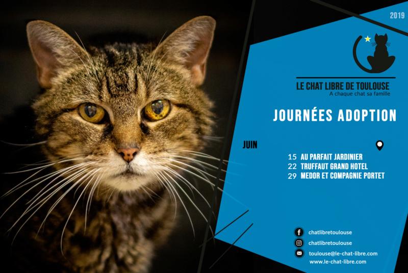 [ Adoptions ] Samedi 22 juin 2019 : Truffaut Grand Hotel  Journz29
