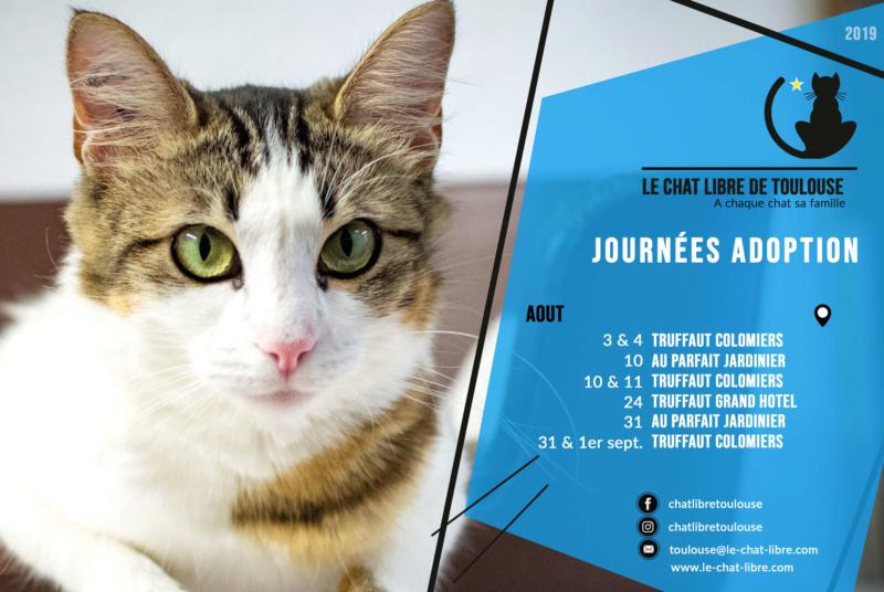 [Adoptions] Samedi 10 et dimanche 11 aout 2019 : Truffaut Colomiers Journz35