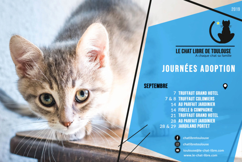 Le planning 2019 des journées adoption Journz36