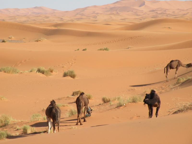[SONDAGE] Quelle est pour vous la meilleure période pour séjourner au Maroc ? 1711