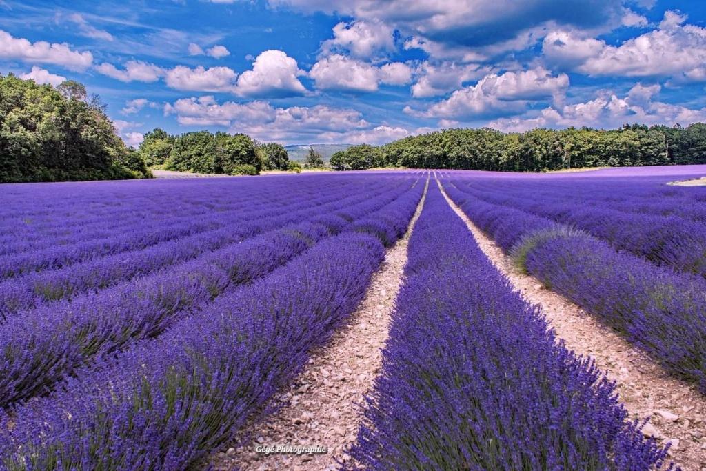 [Autres voyages/France] Le Vaucluse une belle région - Page 3 Pays_d10