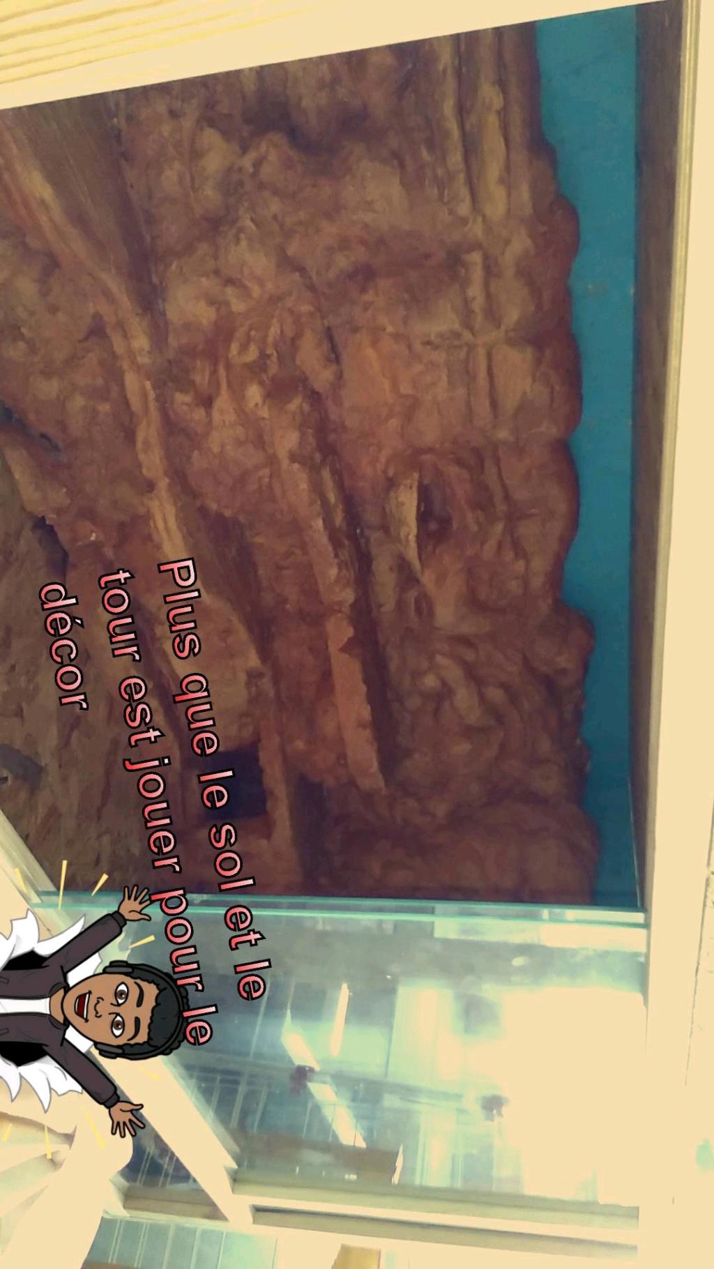 Mon premier terrarium Snapch19
