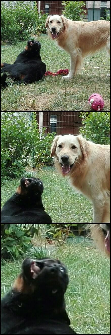 Vos sourires et fou-rires grâce à vos chiens - Page 4 Sans_t10