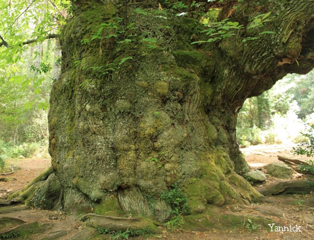 Forêt de Dean Chzone10