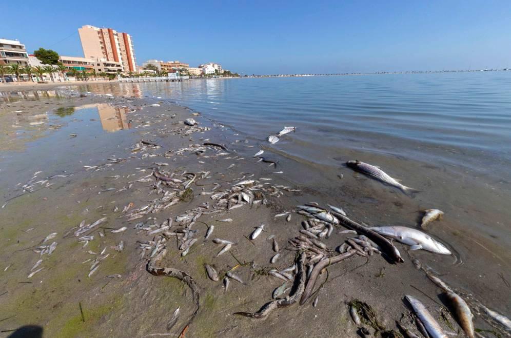 Mar  Menor  (Murcia) Muerte10