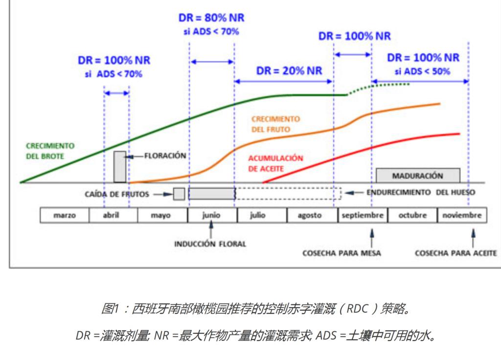 Estrés hídrico en las distintas etapas del ciclo fenológico del olivo 1110