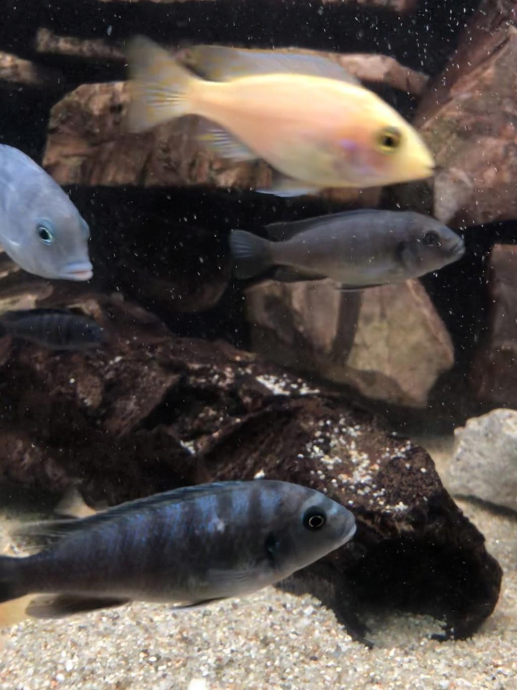 Tâche blanche sur la peau du poisson Decb1e10
