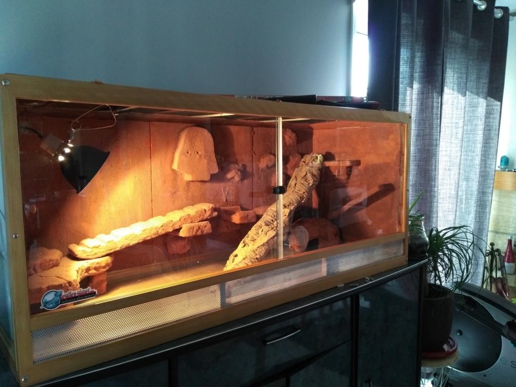 Notre terrarium prend forme  Img_2012