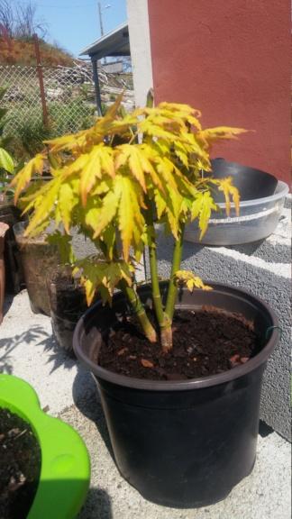 Ayudame a diseñar mi bonsai 20190912