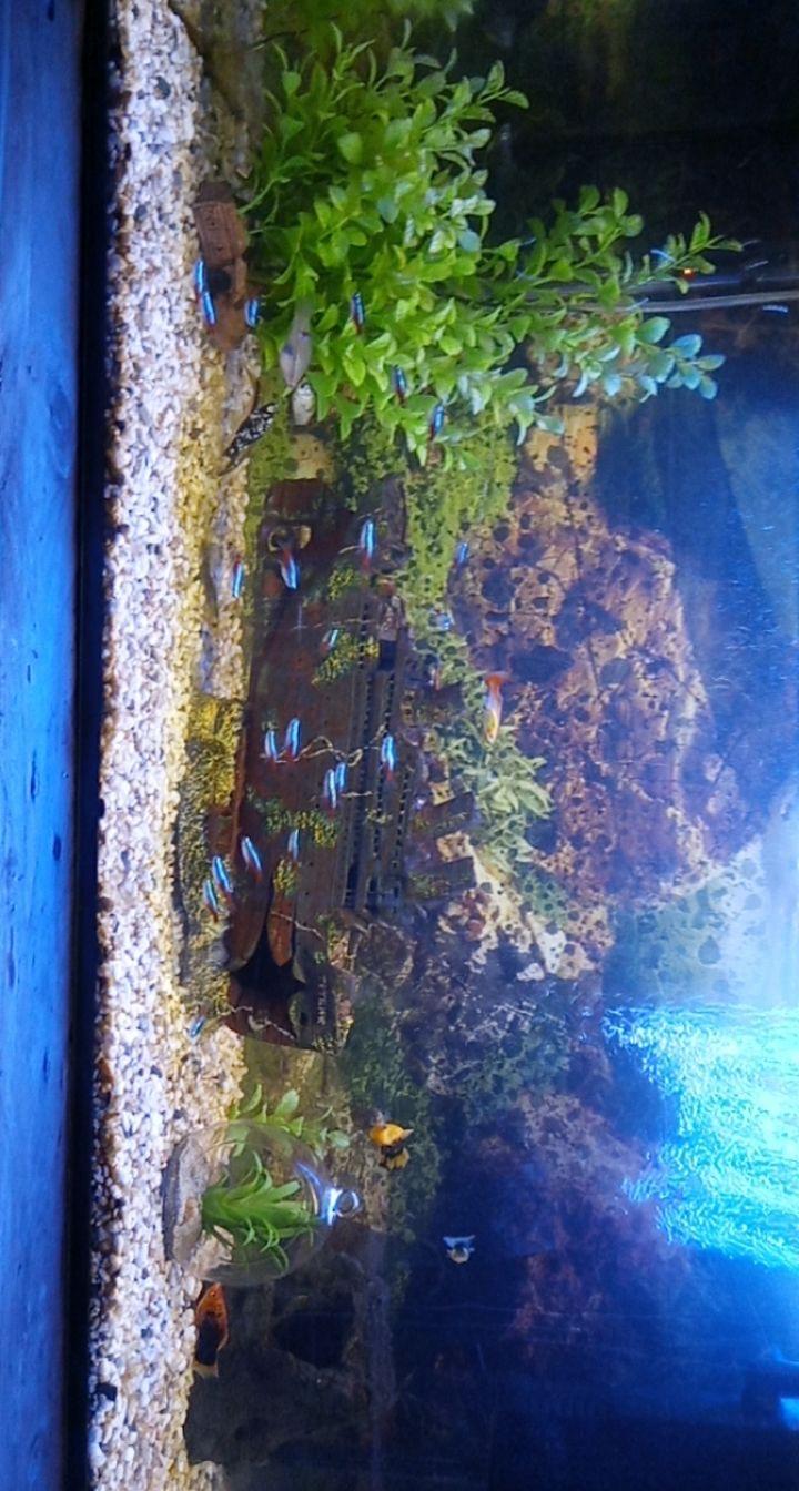 Plante naturel pour aquarium 80litres Img_1810