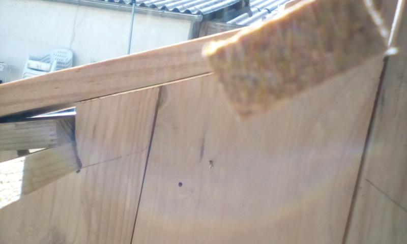 construction cabane de sorcière,  quelle colle pour bardeau bois?  Img_2033