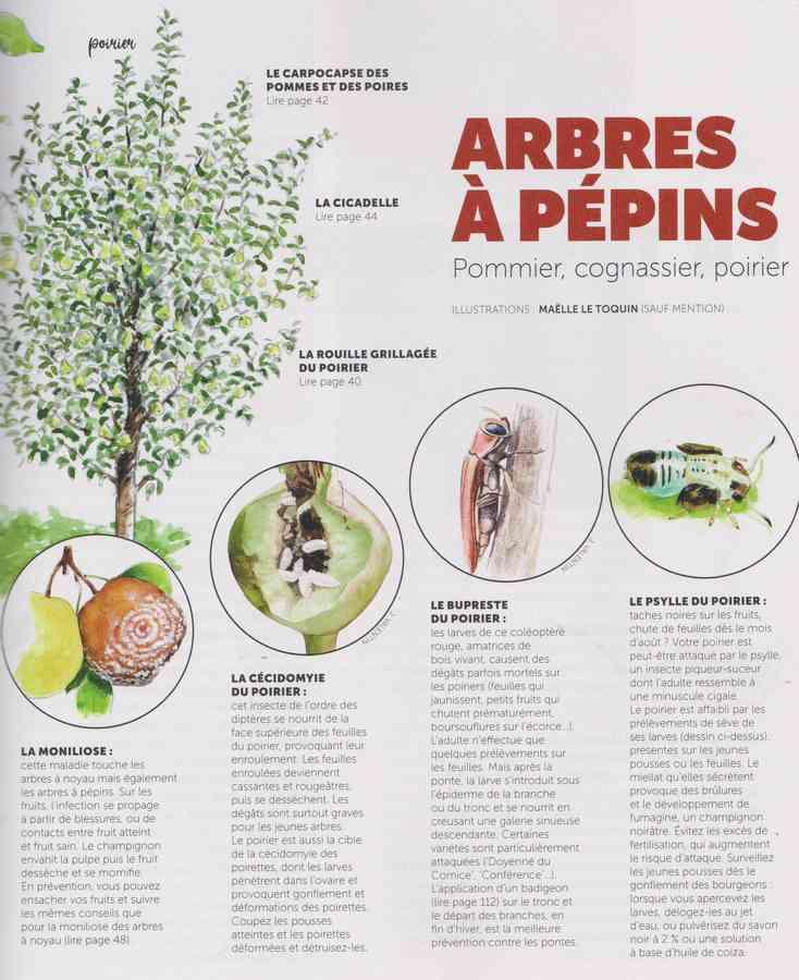 les bestioles - Page 2 10a10