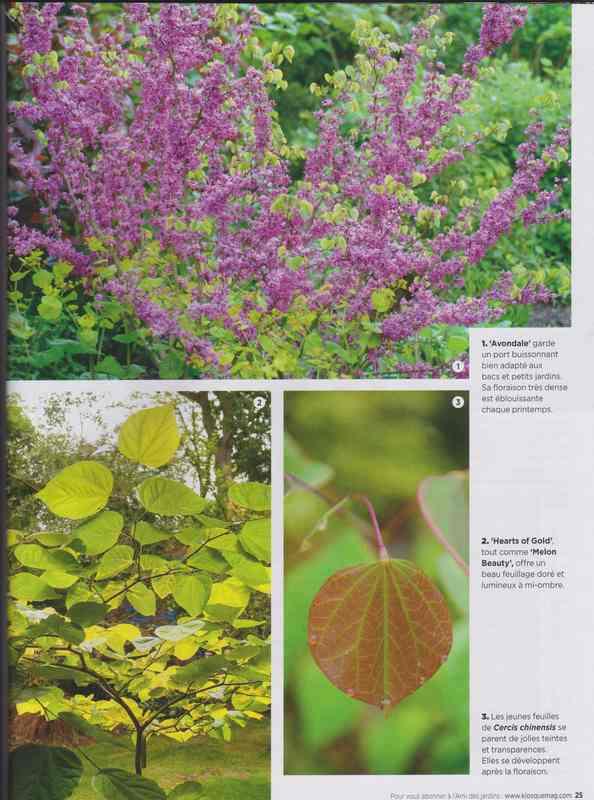 au jardin - Page 7 10a11